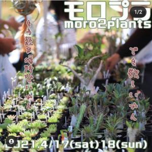 植物のイベント^^