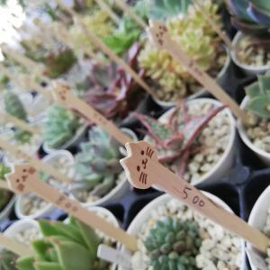 京都府立植物園^^