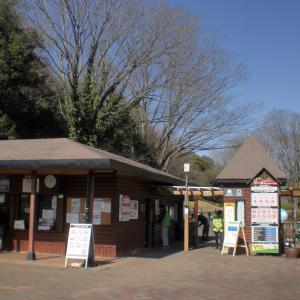 午後から 観梅 武蔵丘陵森林公園(埼玉・滑川)