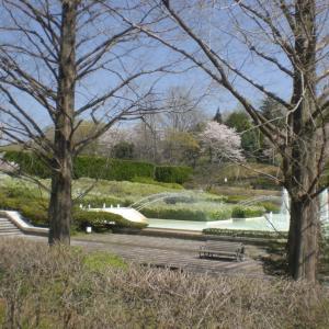 出かけたくて 武蔵丘陵森林公園 その1
