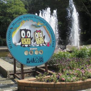 森の昆虫採集(国営武蔵丘陵森林公園)