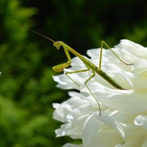 夏! 武蔵丘陵森林公園!(虫)