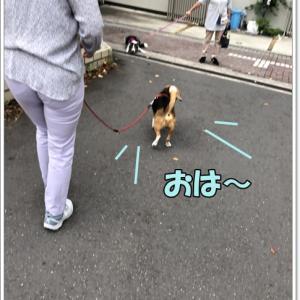 お散歩イヤイヤ症候群!?