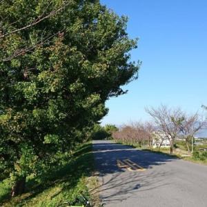 中山道 赤坂宿まで。
