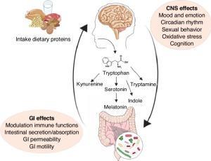 Repost - 過敏性腸症候群 IBS- Irritable bowel syndrome