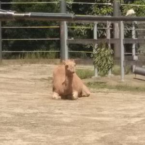 タロンガ動物園デート2