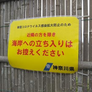 5月7日 湘南 平塚海岸