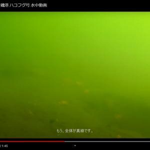 [水中動画] 大磯市 大磯港 2019/05/11