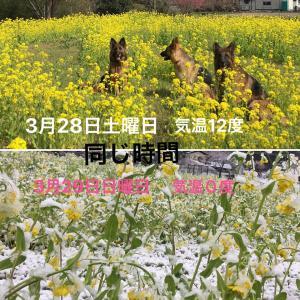 今 日 は 雪 遊 び (笑)(*^_^*)(笑)