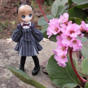 庭のお花とエルノさん