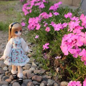 芝桜とエルノさん