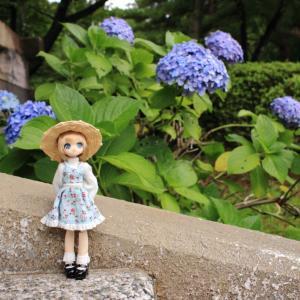 紫陽花とエルノさん