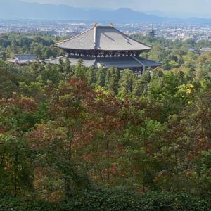 奈良の紅葉の始まり 東大寺大仏殿