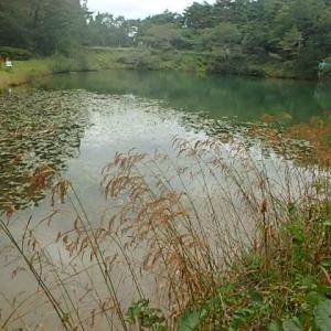 ハナトラノオ咲く池 (19-1020)