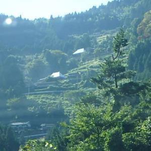 井川の山  野菊咲く (19-1021)