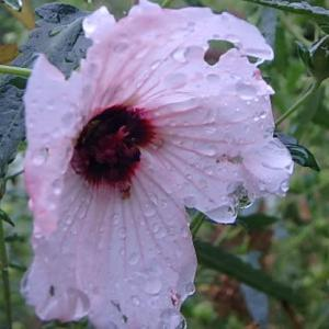 庭の花  (20-0703)