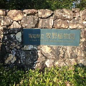 牧野植物園  (21-1205)