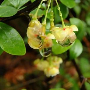 名を知らぬ花とカタクリの実。 (21-0516)