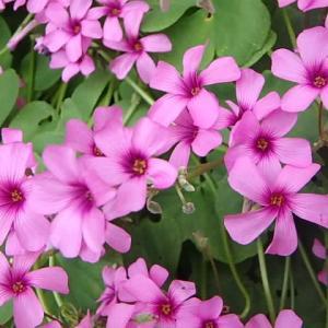 庭の花  (21-0518)