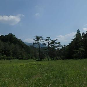黒沢湿原モウセンゴケ& スミレ。 (21-0608)