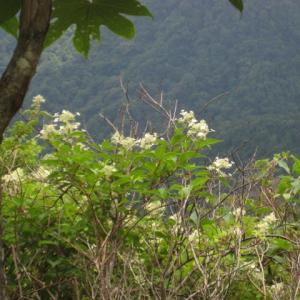 三嶺山のお花  (21-0729)