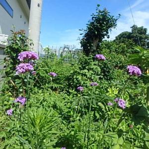 お花と1両列車・コウノトリ。  (21-0730)