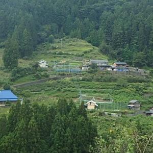 山間部の民家と茶畑・オタカラコウ・シシウド・クサアジサイ。  (21-0923)