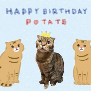 ポーちゃんお誕生日おめでとう