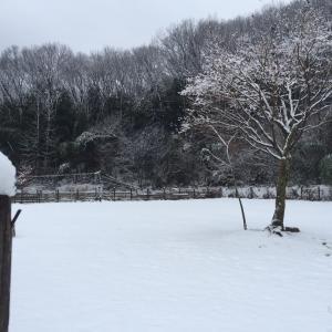 雪のfundogs
