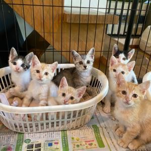 子猫たちの旅立ち