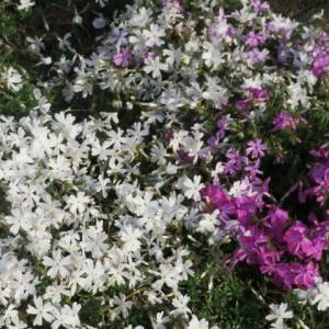 我が家の花壇は花盛り!