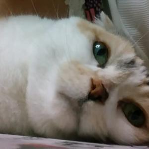 恍惚の猫顔!