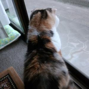 大好きな外眺め・・・そのあとは?