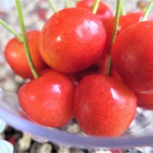 マット系オレンジに重ねるのは✨美容・健康目的の方にも◇好きな納豆 納豆の日◆