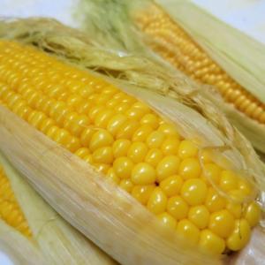 夏バテ防止◇健康美容効果の高い食材の一つ◇夏野菜✨とうもろこし編◆