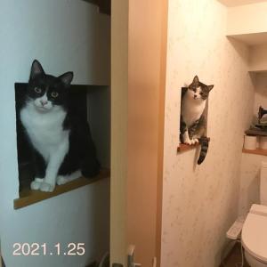 猫たちも誕生日
