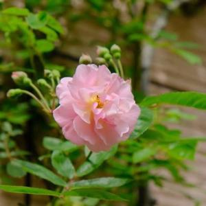 花の季節2020(1)