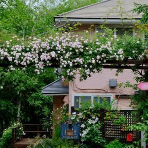 花の季節2020(2)