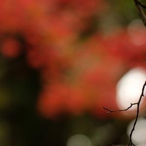 秋色のきらめき…続き