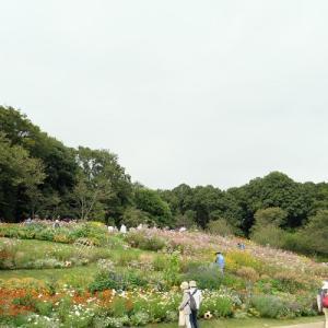 (今頃でしが)ある日の里山ガーデン