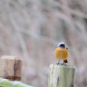 鳥との生活