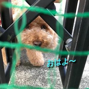 毎朝の、嬉しいご訪問*.。o゚:+☆(*´∀`).。o○
