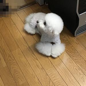 雷が怖くてびびりまくり~(((( ;゚Д゚)))ガクガクブルブル