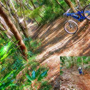 e-mountainbike dreamin XXXXIII