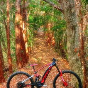 my home trail XXXII - FANTASTIC FANTIC II