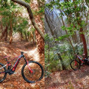 my home trail XXXIII