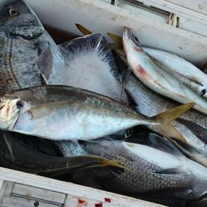 沖磯は魚達の活性が高いようです!!!