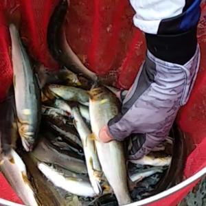 鮎釣りは足を使えば数釣れる?!