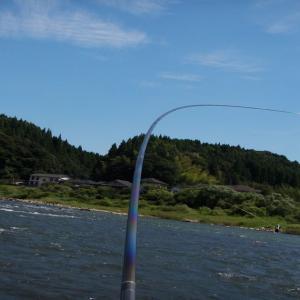 今週末で今年の鮎釣りは納竿の予定だけど・・・
