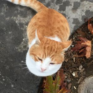 トルコの猫あるある言いたい